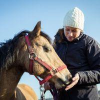 Pferdechiropraktik