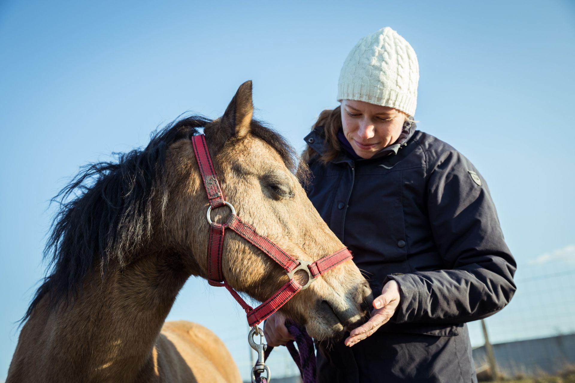 Pferd Diagnose und Therapie