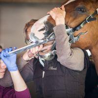 Zahnbehandlung